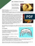 INVERTEBRADOS. Los Principales Grupos de Invertebrados
