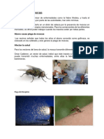 Plagas en San Bernardino Suchitepéquez