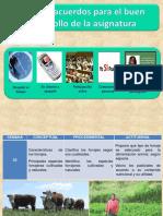 2 Forraje y clasificacion.pptx