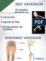 Huesos Miembro Inferior