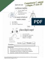 Respiración-La sangre.pdf