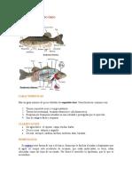 6El esqueleto del pez y morfología interna.doc
