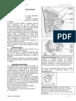 -Anatomia y Fisiologia.pdf