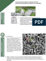 03_Mediciones microscopía.pdf