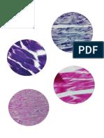 muestras biologia musculos.docx