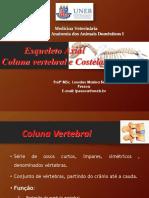 Esqueleto Axial_coluna parte I.pdf