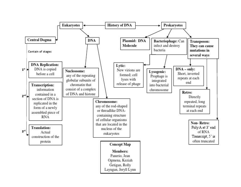 Concept Map Bacteria.Concept Map 1 Dna Molecular Biology