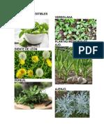 Plantas Comestibles Albahaca