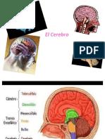 Cerebro. 2016