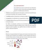 Sangre Componentes y Micronutrientes