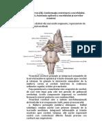 Sistem Nervos 2 (1)