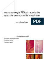 1.-Morfofiziologia-PDA-si-a-raporturilor-apexului-cu-structurile.ppt