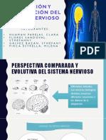 evolucion del sistema nervioso.pptx