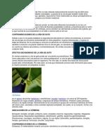 PLANTAS MEDICINALES11