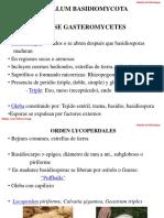 Clase Gasteromycetes Teliomycetes