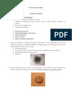 Patologia de Piel