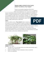 Proyecto Planta Trepadora