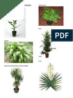 Plantas Ornamentales de Guatemala