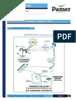 Biología_5_ Fotosíntesis y Respiración Celular