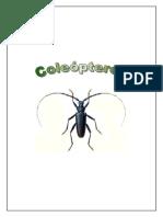 insectos gran guia coleoptero (buenisimo con laminas antiguas).pdf
