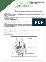 205238194 Coursorigine Etmaturation Des Lyphocytes