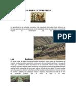LA AGRICULTURA INCA.docx