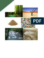 selva vs el desierto pictures for slides