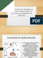 Documentos Receptores de Membranas