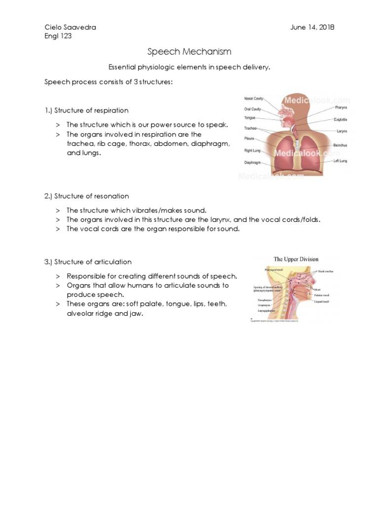 speech mechanism in english