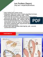 Phylum Porifera (Spon)