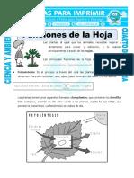 Ficha Funcion de La Hoja Para Cuarto de Primaria
