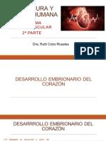 19a Sesión Estructura y Función Sistema Cardiovascular 2a parte