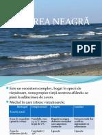 Marea Neagra.pptx