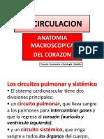 Circulacion. Aparato Cardiovascular