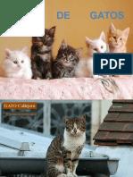 Puros Gatos