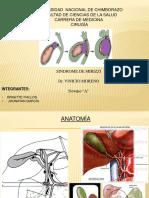 sindromemirizzi.pdf
