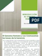 2. Genoma Humano