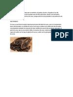 Cómo Se Cultiva El Cacao