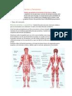 Músculos Importantes y Funciones