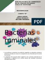 Bacterias Del Rumen