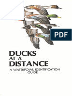 Duck Id Guide.pdf