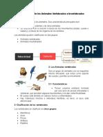 Clasificación de Los Animales Vertebrados e Invertebrado1