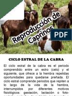 Reproducción de Caprinos