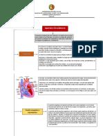 Sistema Circulatorio Matriz
