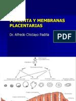 Placenta 2010