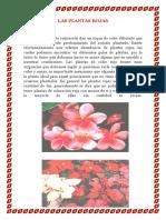 Las Plantas Rojas