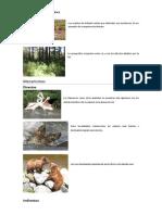 Funciones de Los Animales