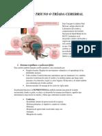 Cerebro Triuno o Tríada Cerebral