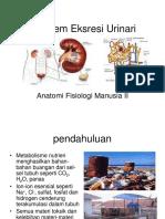 ekskresi urinaria