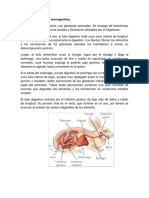 El Sistema Digestivo Monogastrico